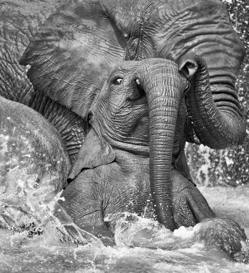 ...splish, splash...: Amazing Elephants, Baby Elephants, Mother, Animals Elephants, Elephants Photos, Creatures, Bath Time