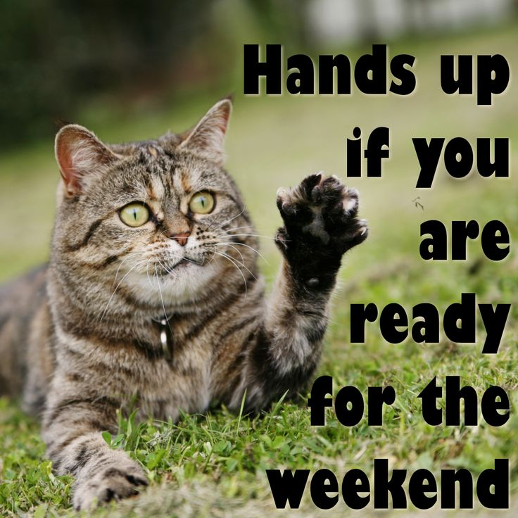 Funny Quotes About Friday Weekend: Best 25+ Weekend Humor Ideas On Pinterest