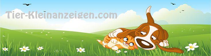 Leon bei Tiere suchen ein Zuhause - Tatort Krumme Hunde - http://www.tier-kleinanzeigen.com/leon-bei-tiere-suchen-ein-zuhause-tatort-krumme-hunde/