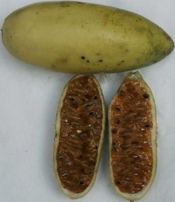 Caruba/banana passion fruit  The flavour is similar to a passionfruit but even more powerful