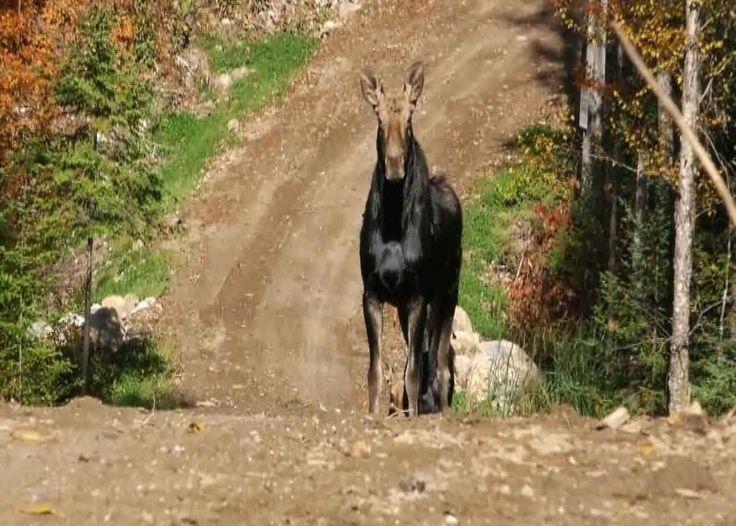 #VR #VRGames #Drone #Gaming TISONAGAN - La lune d'Anoki - Chasse à l'orignal chasse, Chasse à l'orignal, Chasse Québec, Didakto Communication, Drone Videos, gibier, Hunting (Interest), Martin le trappeur, Moose (Animal), Moose hunting, orignal, Pourvoirie Lac de l'Indienne, Squaw Lake Outfitter, Tisonagan #Chasse #ChasseÀL'Orignal #ChasseQuébec #DidaktoCommunication #DroneVideos #Gibier #Hunting(Interest) #MartinLeTrappeur #Moose(Animal) #MooseHunting #Orignal #Pourvoi