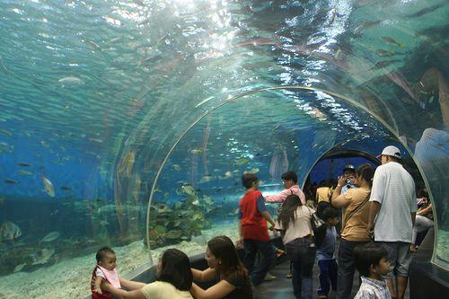 Singapore - Under Water A Large Aquarium, Underwater World