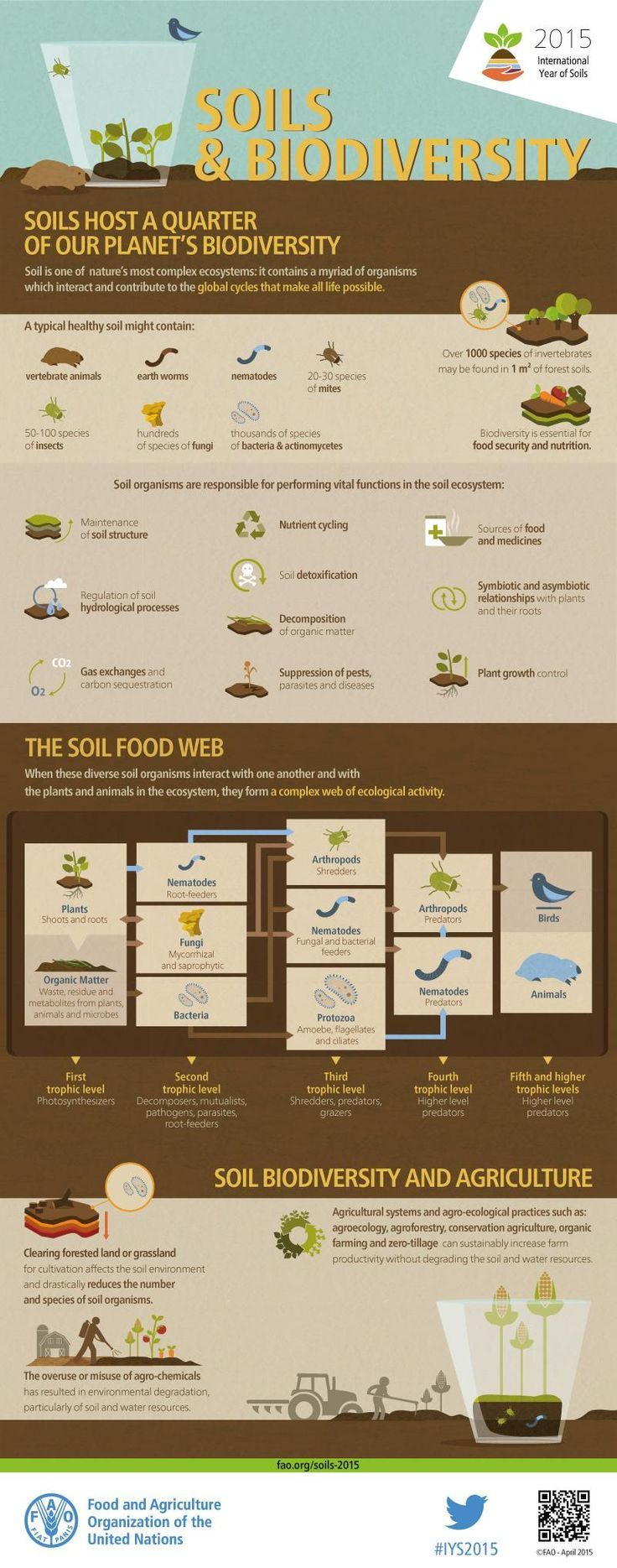 #DidYouKnow soils host 25% of our planet's #biodiversity? Explore with this infographic from @FAOnews #IYS2015