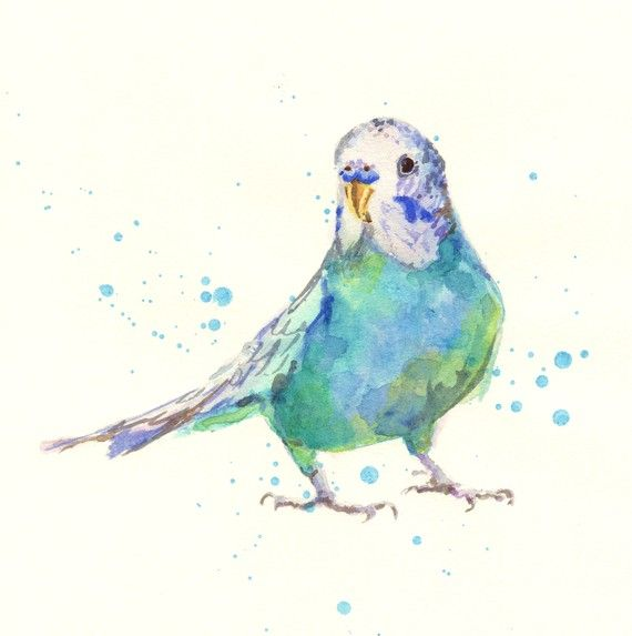 budgie watercolour print......this little guy just makes me smile.
