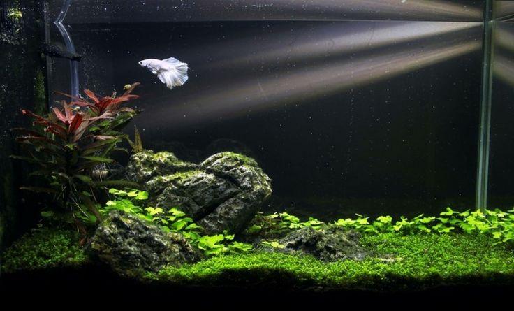 décor minimaliste de petit aquarium