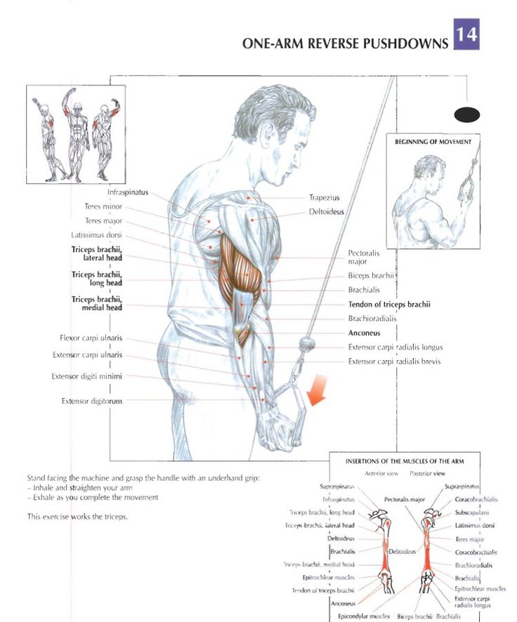 22 best Training anatomy (Arms) images on Pinterest | Anatomy ...