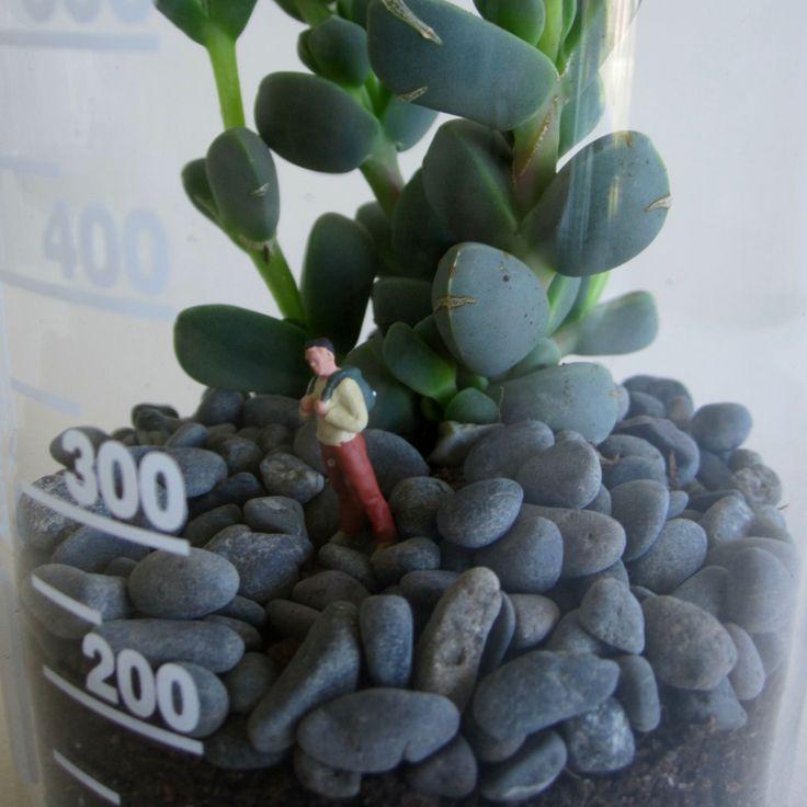 A tiny terrarium inhabitant within a succulent terrarium, created by Bramble Thicket.
