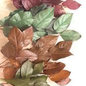 Dried Lemon Leaf - Dried Salal Plant Leaves  - DriedDecor.com