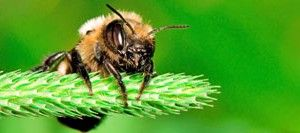 What makes honey bees aggressive? | Honey Bee Suite
