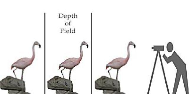 What Is Depth of Field?: What is Depth of Field?
