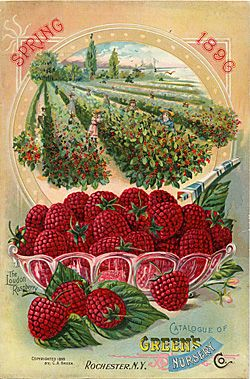 Company Name: Green's Nursery Co. Catalog Title: Spring 1896 (1896)