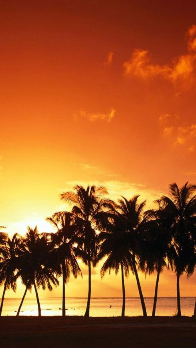 beautiful, sunset, palm trees, beach, Nature iPhone