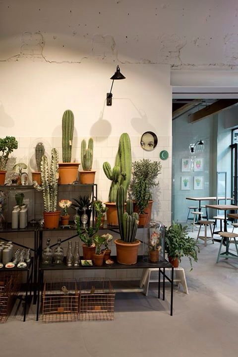 Love The Cacti Garden Inside