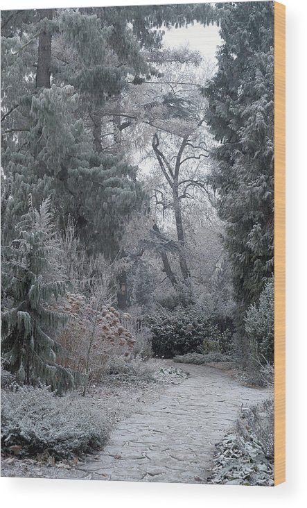 Jenny Rainbow Fine Art Photography Wood Print featuring the photograph Enchanted Winter Garden by Jenny Rainbow