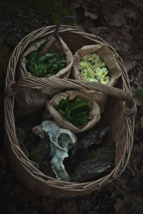 """When you're going outside to """"pick some flowers"""" but bring back half of the forest with you in your basket #justwitchesthings (Ysambre - Photographer and artist from France)"""