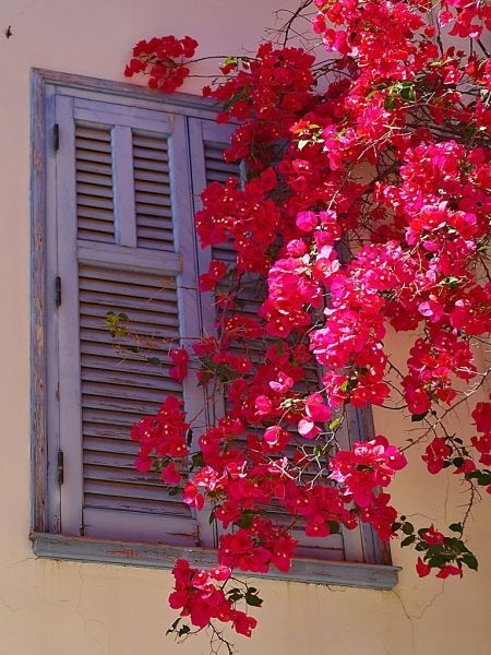 The window and flowers