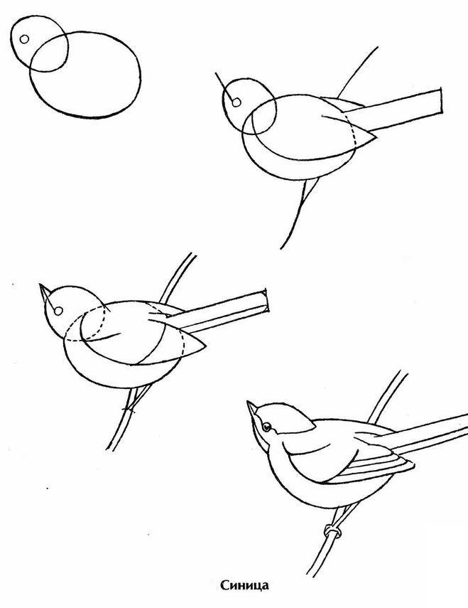 птицы рисовать карандашом легко пляжа