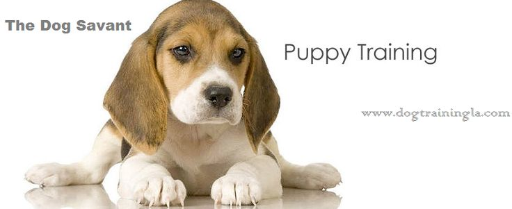 Are you looking for Los Angeles puppy training classes..? The Dog Savant is the perfect place to train your dog and puppy. Call puppy training specialist Mr. Brett at: 310-227-1424