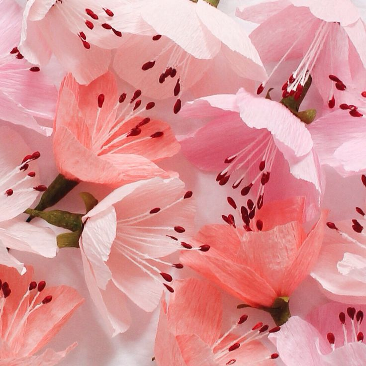 Paper cherry blossom flowers by A Petal Unfolds