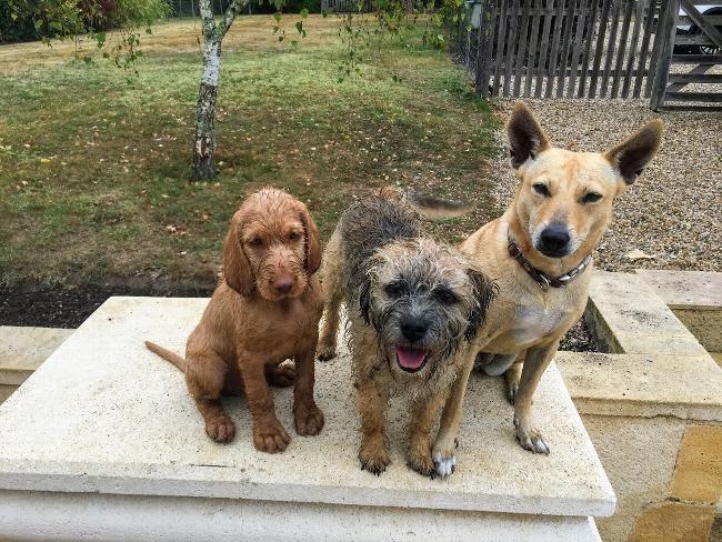 Housesitter Jul 24 2019 Short Term Saint Meard De Gurcon South West France Fran Dogs Housesitting Live In Dogsitters Needed Dog Lovers Dogs Pets