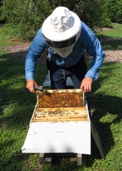 How to Start an Urban Bee Hive - Urban Farm Online