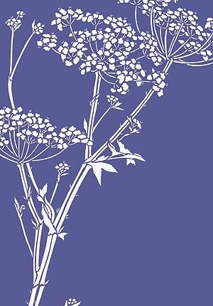 Giant Hogweed Queen Anne's Lace Stencil