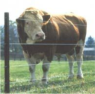 A well-constructed high-tension fence will outlast both barbed wire and woven wire with less maintenance, and is a more humane alternative to barbed wire. Originally published as