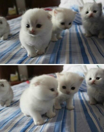 cutest cats EVER