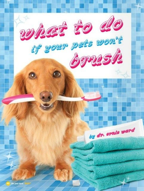 What to do if your pets won't let you brush their teeth