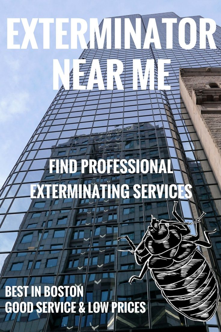 The Ultimate Guide to Hiring Local Bed Bug Exterminators