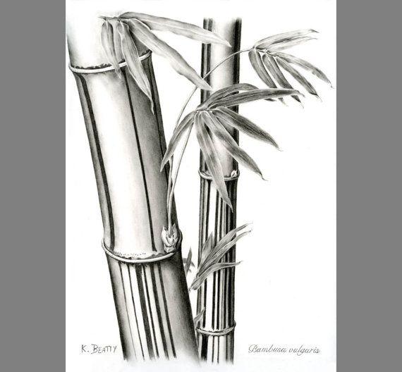 bamboo drawing - photo #25