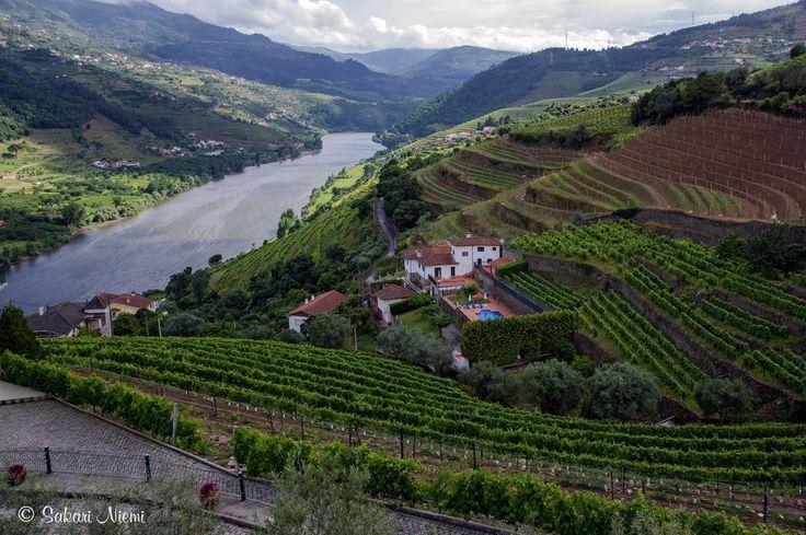 PT_160616 Portugali_0085 Viinipengerryksiä Alto Douron Redessä