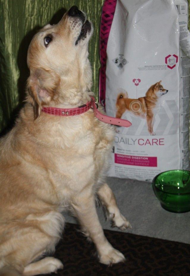 Maistuvaa ruokaa erityistarpeiselle koiralle. Hopottajat testissä Eukanuba Daily Care: Sensitive digestion: http://www.hopottajat.fi/eukanubadailycare/ #eukkis