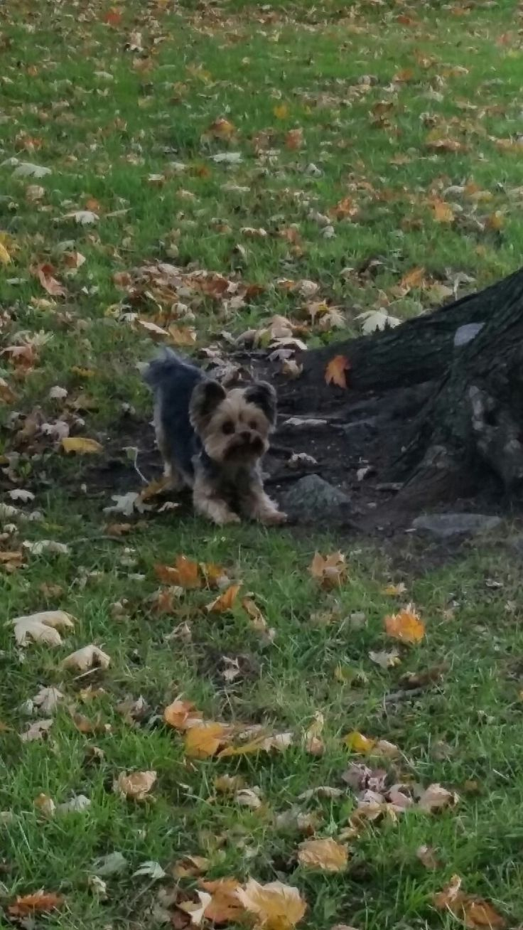 Ready? Set? Chase that squirrel!  #jakey #goodtimes