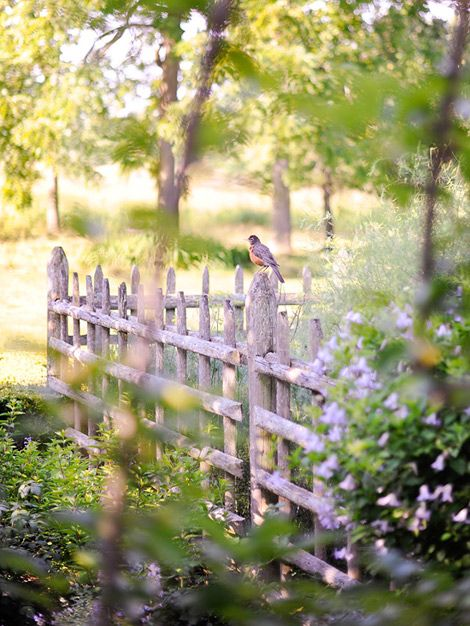 GORGEOUS fence: Gardens Fence, Little Birds, Robins, Rustic Fence, Dreams Gardens, Spring, White Picket Fence, Flower, Country
