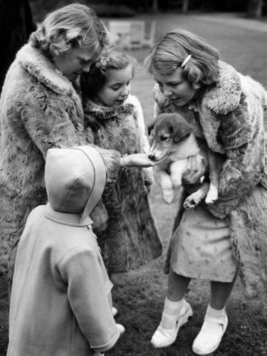 Prinses Beatrix toont in 1950 in de tuin van Paleis Soestdijk een nieuw hondje aan haar zusjes. V.l..n.r. prinses Marijke (jasje met capuchon), prinses Irene, prinses Margriet en prinses Beatrix, gekleed in bontjasjes.