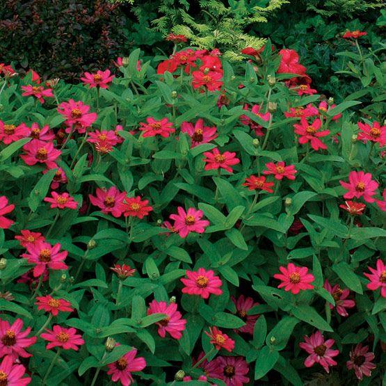 Garden Ideas Zone 6: Cottage Garden Zone 6 Images On