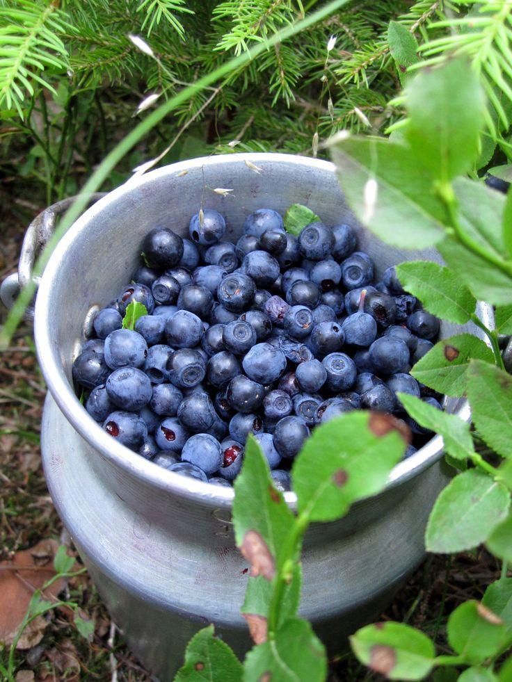Slovak blueberries