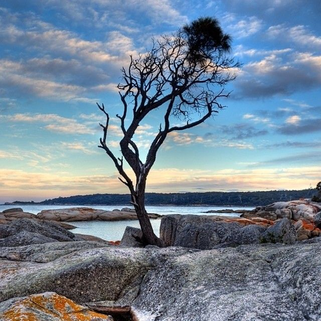 The infamous lone tree standing defiantly on the granite boulders of Binalong Bay on Tasmania's east coast. #Baum