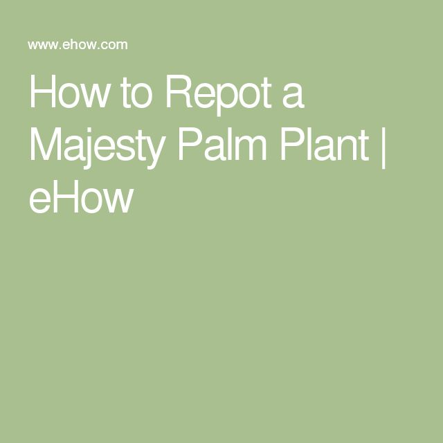 25 best ideas about majesty palm on pinterest pink geranium pool plants and pool landscaping. Black Bedroom Furniture Sets. Home Design Ideas