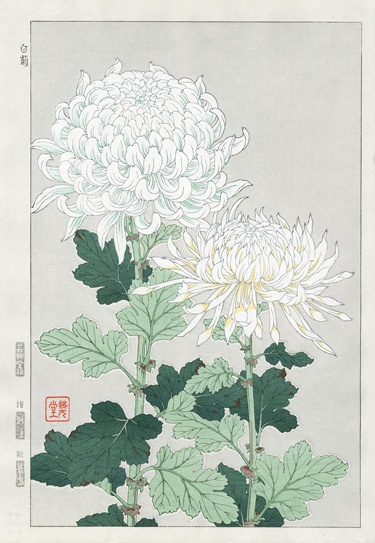 Chrysanthemums (a Japanese print).