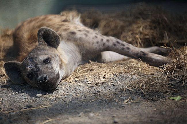 動物園放浪記の画像
