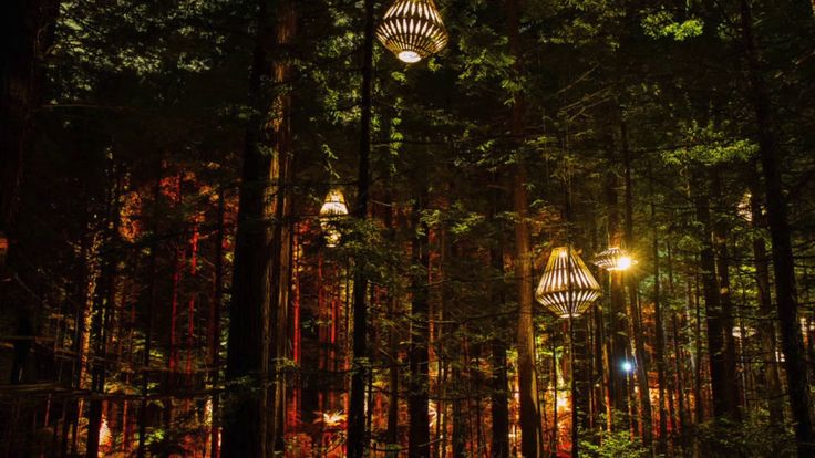 forest night light - YouTube
