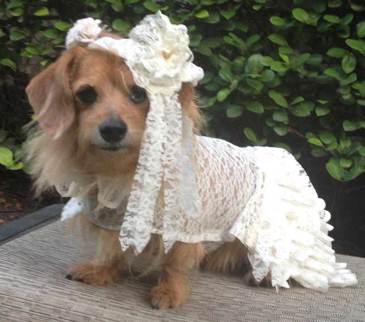 Dog Wedding Dress with Veil by FiercePetFashion - The 25+ Best Dog Wedding Dress Ideas On Pinterest Dog Wedding