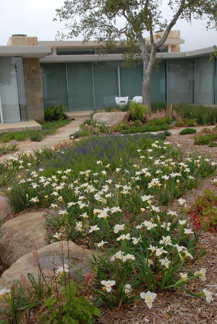 Front yard. No lawn. Patio stones, paths, and native plants & grasses. Natural. Beautiful.