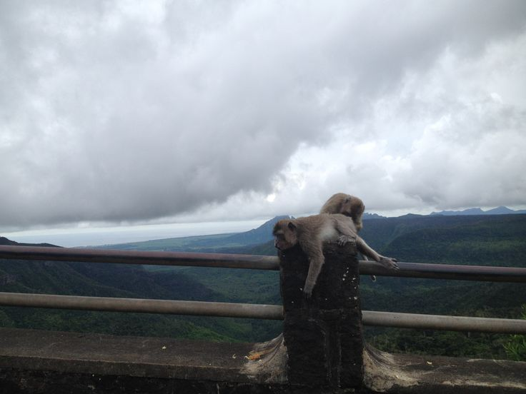 The Black River George National Park, Monkeys #Mauritius