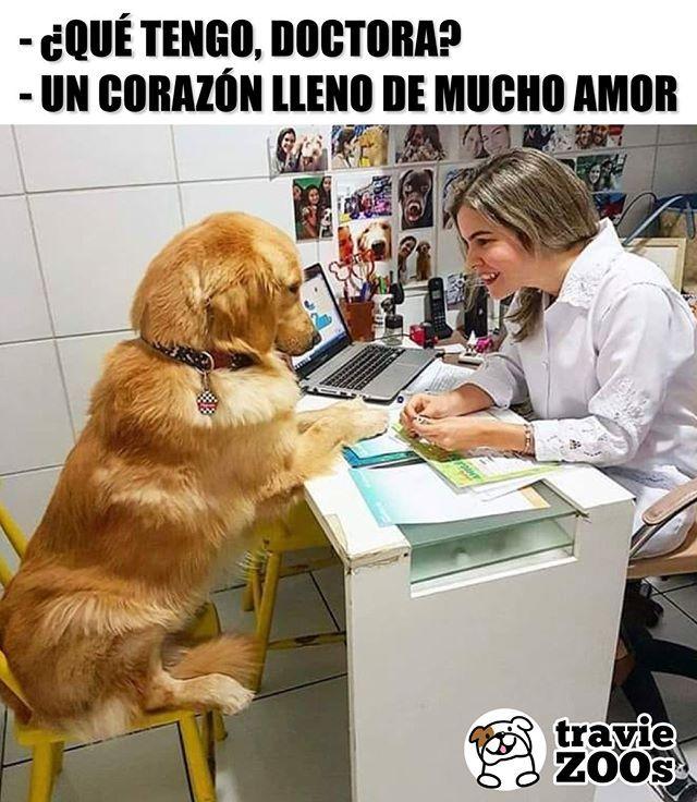 Por Eso Te Duele Tanto Firulais Por Culpa De Los Humanos Corazon Heart Love Animales Golden Perro Dog Chistes De Perros Memes Perros Perros Frases