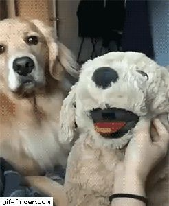 The Most Jealous Dog in History