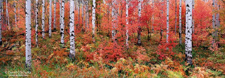 3-5233 copyAutumn in the Wasatch Mountains