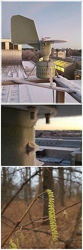 Under den milda hösten har vi fortsatt pollenmätningarna i Stockholm. Juldagarna bjöd på både blommande hassel och pollen i fällan.